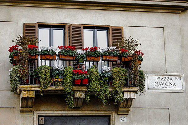 Flowers-in-Rome